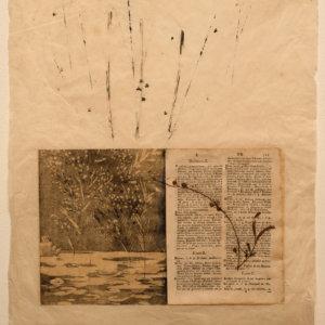 7-el-llibre-de-la-mimosa